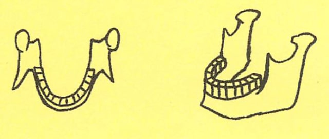 骸骨の描き方19