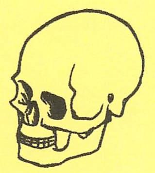 骸骨の描き方21