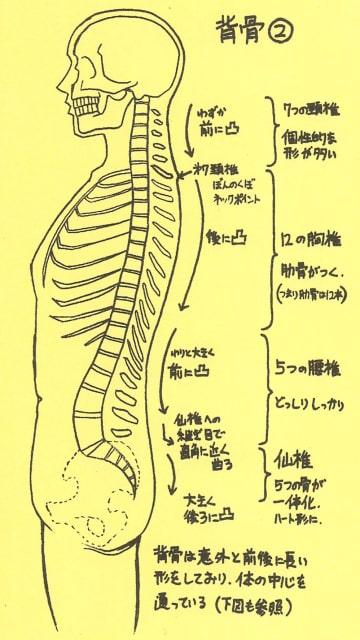 骸骨の描き方29