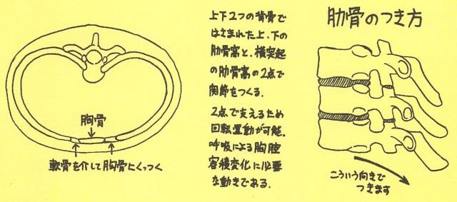 骸骨の描き方31