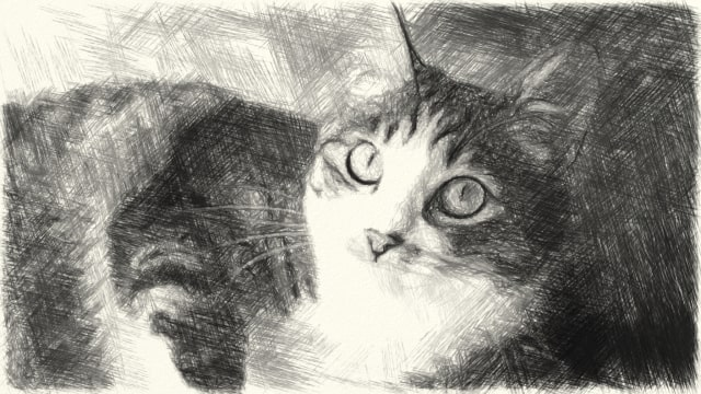 猫の写真のSketch描写