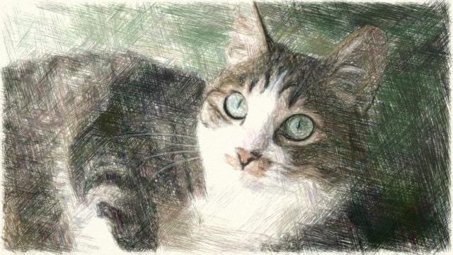猫の写真のColorPencil描写