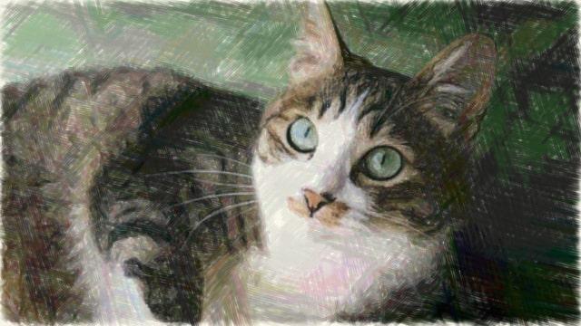 猫の写真のMarker描写