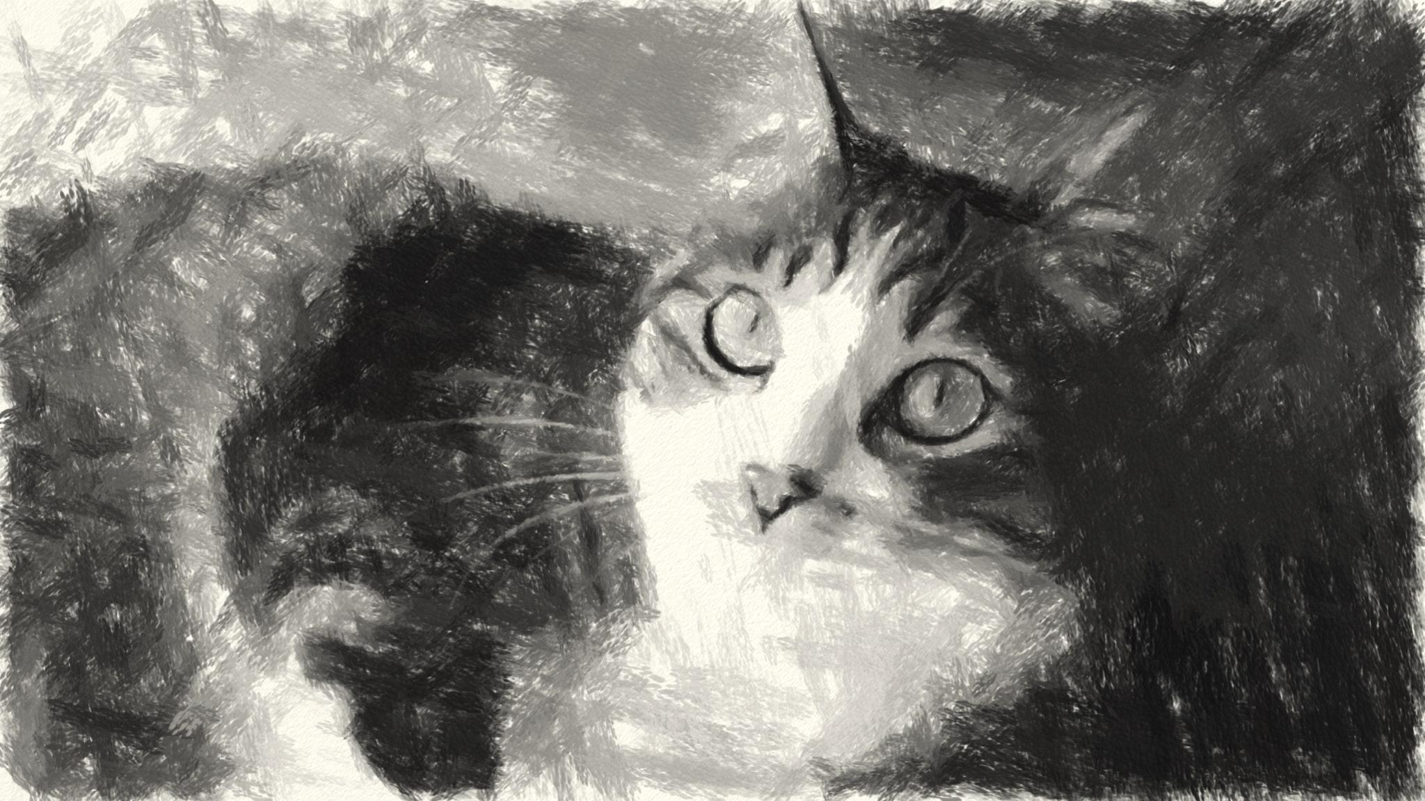 猫の写真のCharcoal描写