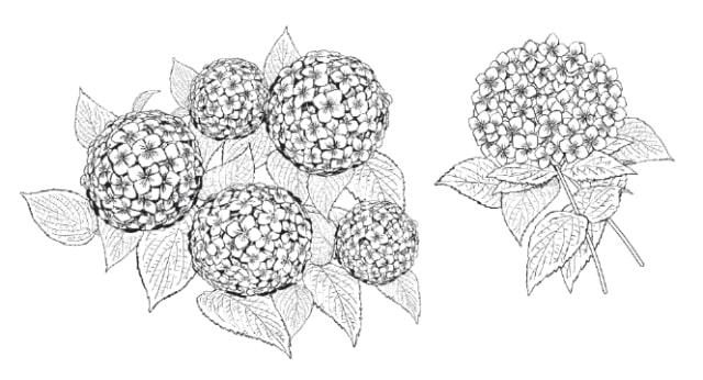 紫陽花マルチブラシセットの作例