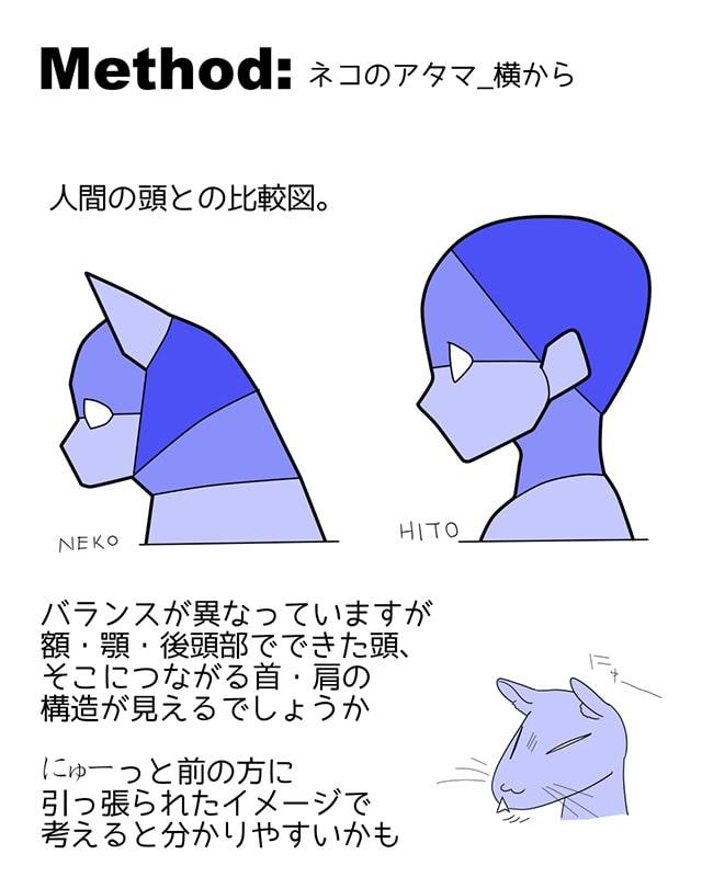 猫の頭02