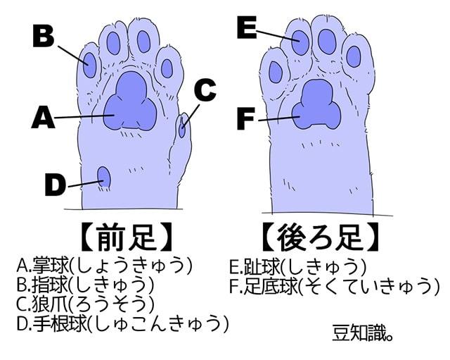 猫の手OK