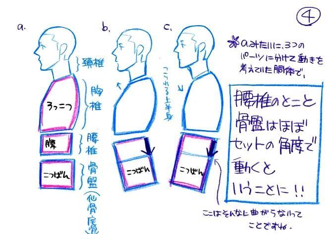 腰椎と骨盤はセットで動く