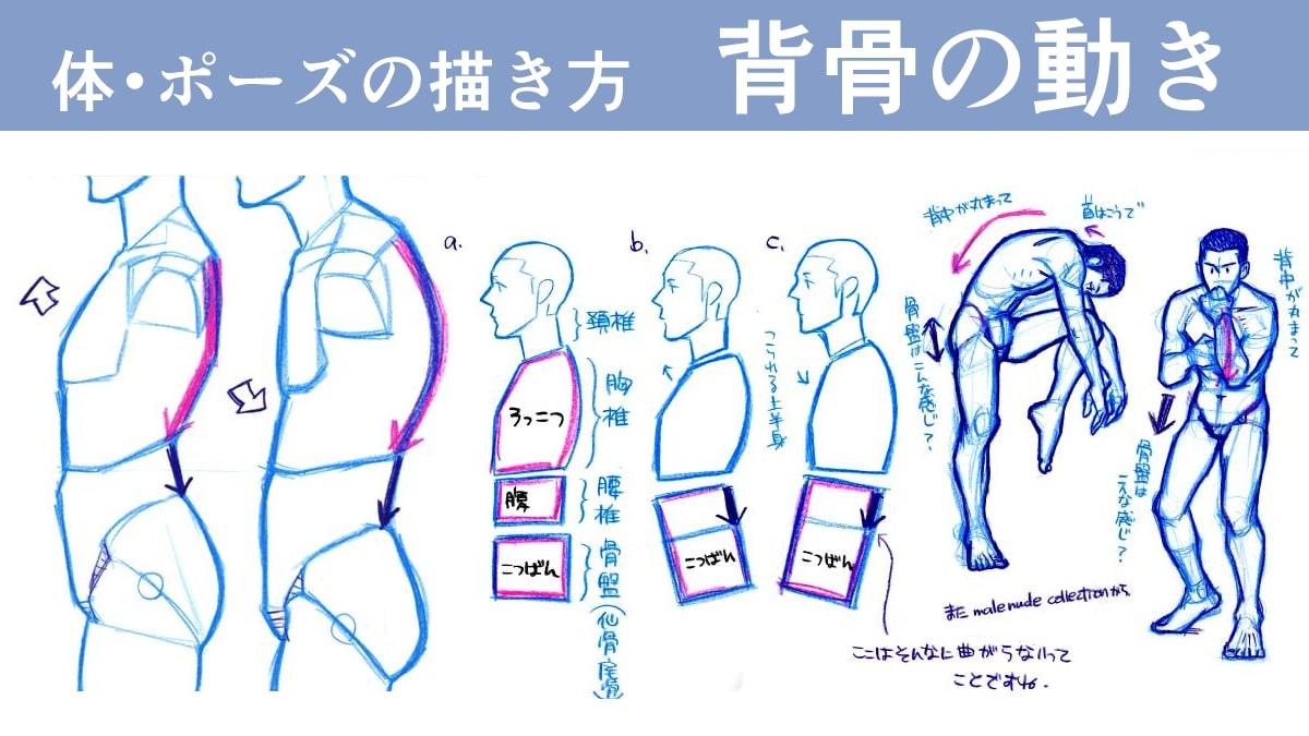 ポーズの描き方!「背骨の動き」から自然な姿勢を考えよう